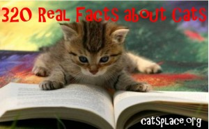 320 Interesting & Real facts about Cats, fun fatcs about cats, strange facts about cats
