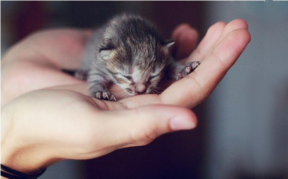 newborn kitten's care 6 weeks