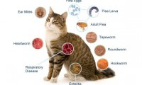 Cat's Common Preventable Diseases