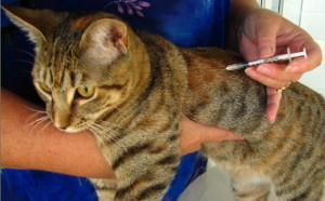 vaccines schedule for cats