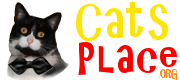 Cat's place useful information about cats