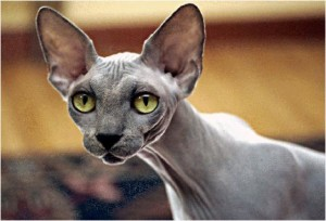 THE ELF CAT