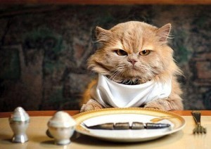 RANKING best food for cats